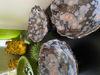 Afbeeldingen van 3 Schaaltjes van Keramiek op pootjes