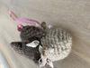 Afbeeldingen van Vis bruin met schelpen
