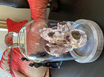 Afbeeldingen van Stolp met schelp